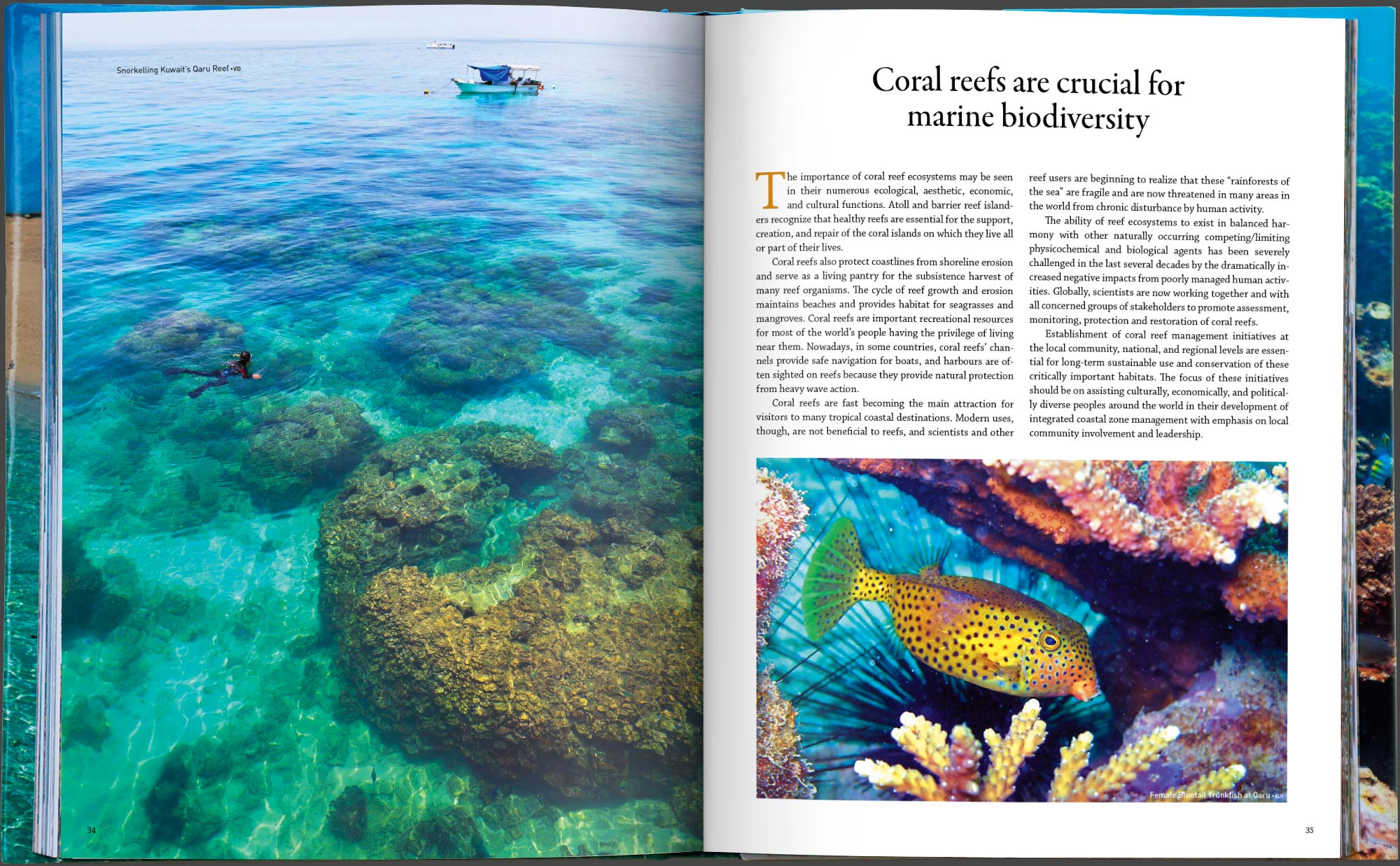 Then Layout Color Correction And Supervising The Production In Printing Binding Stages Download Link Coral Reefs Of Kuwait Book Pdf Ebook